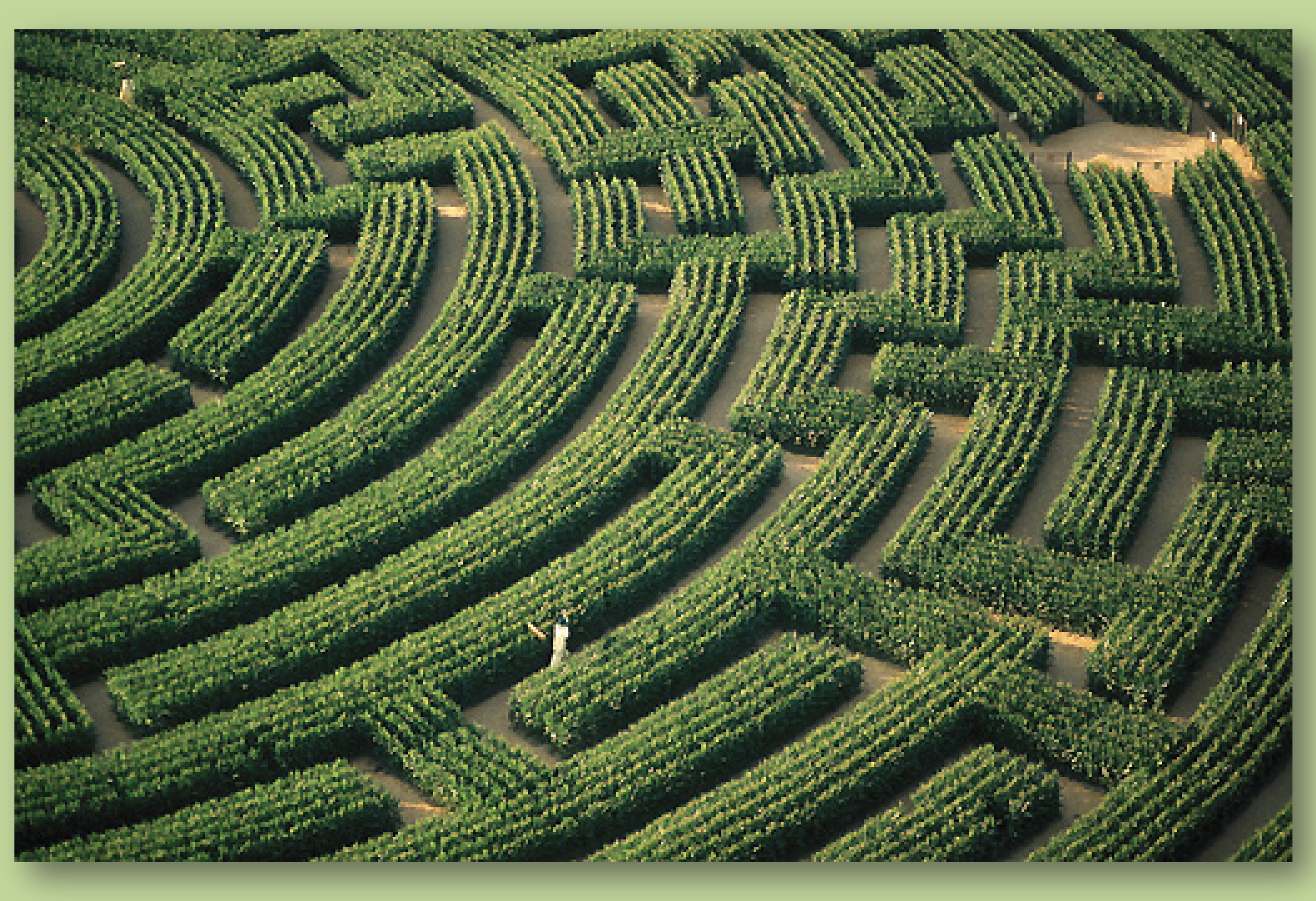 Michael Chaffee, The Maze